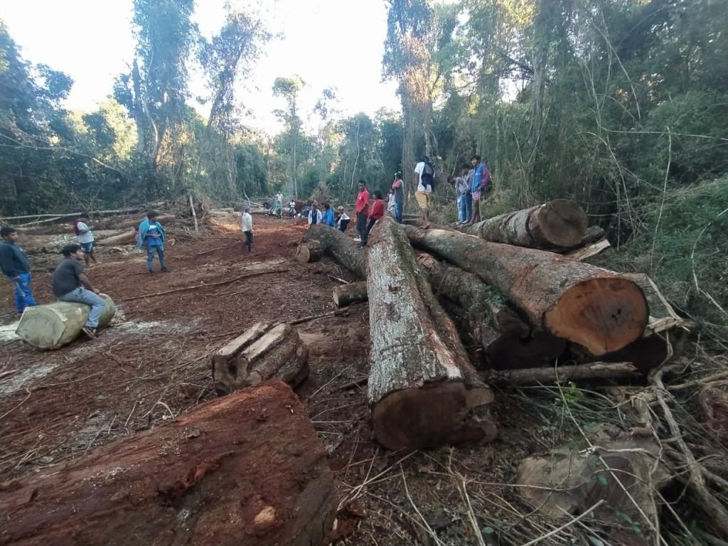 Misiones: La comunidad Mbya Guaraní Ka'a Kupe exige el cese del desmonte de empresa forestal